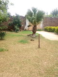 Drzewo odsiewa z zielonymi roślinami obraz stock