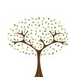 drzewo oliwne Zdjęcie Stock