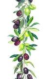 Drzewo oliwne gałąź Akwareli granicy lampas ilustracja wektor