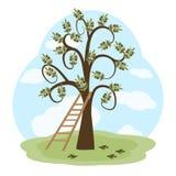Drzewo oliwne i drabina Zdjęcie Royalty Free