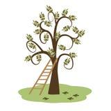 Drzewo oliwne i drabina Zdjęcia Stock