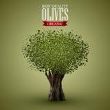 Drzewo oliwne na o zieleni tle Obrazy Stock