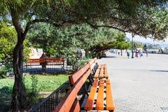 Drzewo oliwne nad ławką na bulwarze w Alushta obrazy royalty free