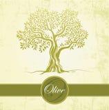 Drzewo oliwne. Oliwa z oliwek. Wektorowy drzewo oliwne na rocznika papierze. Dla etykietek, paczka. royalty ilustracja