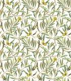 Drzewo oliwne opuszcza bezszwowego wzór Obraz Royalty Free