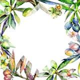 Drzewo oliwne rama w akwarela stylu odizolowywającym Fotografia Royalty Free