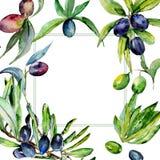 Drzewo oliwne rama w akwarela stylu odizolowywającym Obrazy Stock