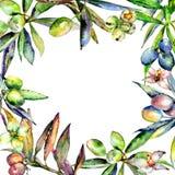 Drzewo oliwne rama w akwarela stylu odizolowywającym Obraz Stock