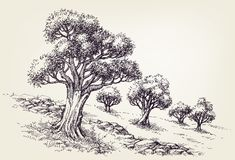 Drzewo oliwne sad ilustracja wektor