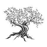 Drzewo oliwne sylwetki ikona odizolowywająca Zdjęcie Stock