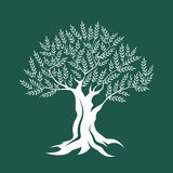 Drzewo oliwne sylwetki ikona odizolowywająca na zielonym tle Fotografia Royalty Free