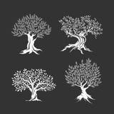 Drzewo oliwne sylwetki ikona ustawiająca odizolowywającą Zdjęcia Royalty Free