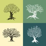 Drzewo oliwne sylwetki ikony set Fotografia Royalty Free