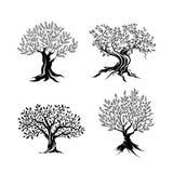 Drzewo oliwne sylwetki ikony set Zdjęcie Stock