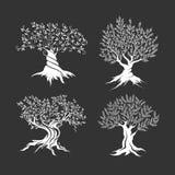 Drzewo oliwne sylwetki ikony set Zdjęcie Royalty Free