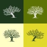 Drzewo oliwne sylwetki ikony ustawiać Zdjęcie Royalty Free