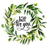 Drzewo oliwne wianek w akwarela stylu odizolowywającym Zdjęcie Royalty Free