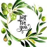 Drzewo oliwne wianek w akwarela stylu odizolowywającym Zdjęcie Stock