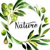 Drzewo oliwne wianek w akwarela stylu odizolowywającym Fotografia Royalty Free