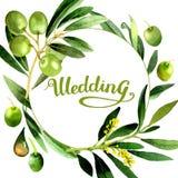 Drzewo oliwne wianek w akwarela stylu odizolowywającym Obraz Royalty Free