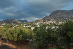 Drzewo oliwne wiecznozielony sad na grku Kalymnos Zdjęcia Stock