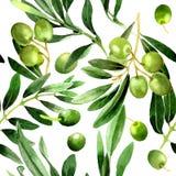 Drzewo oliwne wzór w akwarela stylu odizolowywającym Obrazy Stock