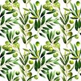 Drzewo oliwne wzór w akwarela stylu odizolowywającym Obraz Stock