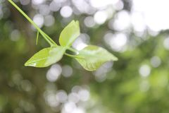 Drzewo opuszcza Z powrotem Dla ziemi fotografia royalty free