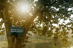 Drzewo opuszcza z słońce promieniami od behind, zima ranku scena Fotografia Stock