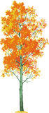 drzewo osikowy wektor ilustracji