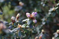 Drzewo pączki i starzy liście obrazy royalty free