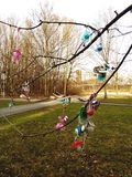 Drzewo pacyfikatory obrazy royalty free