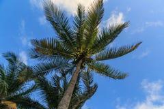 drzewo palm nieba Zdjęcie Royalty Free
