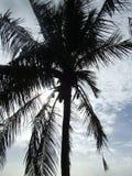 drzewo palm słońca Obrazy Royalty Free