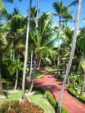 Drzewo palmy domowy dach pokrywać strzechą Zdjęcie Stock