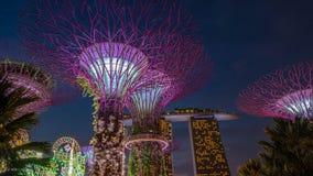 Drzewo park jest punktem zwrotnym Singapur przy nocą Fotografia Stock