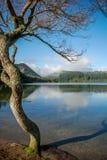 Drzewo peacefull jeziorem Fotografia Royalty Free
