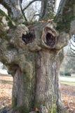 Drzewo personifikujący z twarzą Obrazy Royalty Free