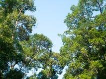 Drzewo Perspektywiczny unikalny natury zieleni urlopu widok spod dużego zielonego drzewa Naturalny i środowisko pojęcie Zdjęcia Royalty Free