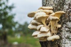 Drzewo pieczarka Zdjęcie Stock