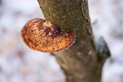 Drzewo pieczarka Zdjęcie Royalty Free