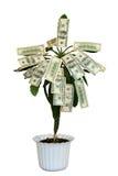 drzewo pieniądze Fotografia Royalty Free
