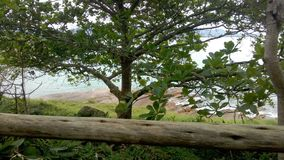 Drzewo plażą fotografia royalty free