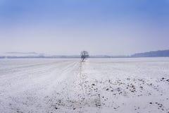 Drzewo po środku zimy śnieżnego pola Obrazy Royalty Free