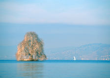 Drzewo po środku jeziora Fotografia Royalty Free