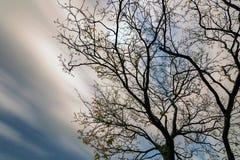 Drzewo Pod blaskiem księżyca Obraz Royalty Free