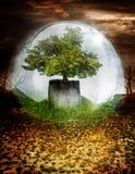 Drzewo pod chronienie kopułą Zdjęcia Stock