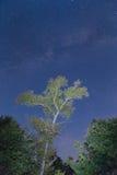 Drzewo pod milky sposobem Zdjęcie Royalty Free