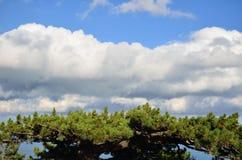 Drzewo pod slkies Obrazy Stock