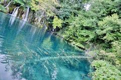 drzewo pod wodą Zdjęcia Stock
